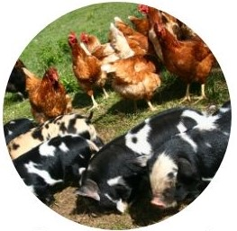Animals de granja